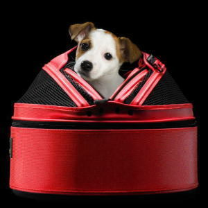 SP-RED-on_black-side_terrier[1].jpg